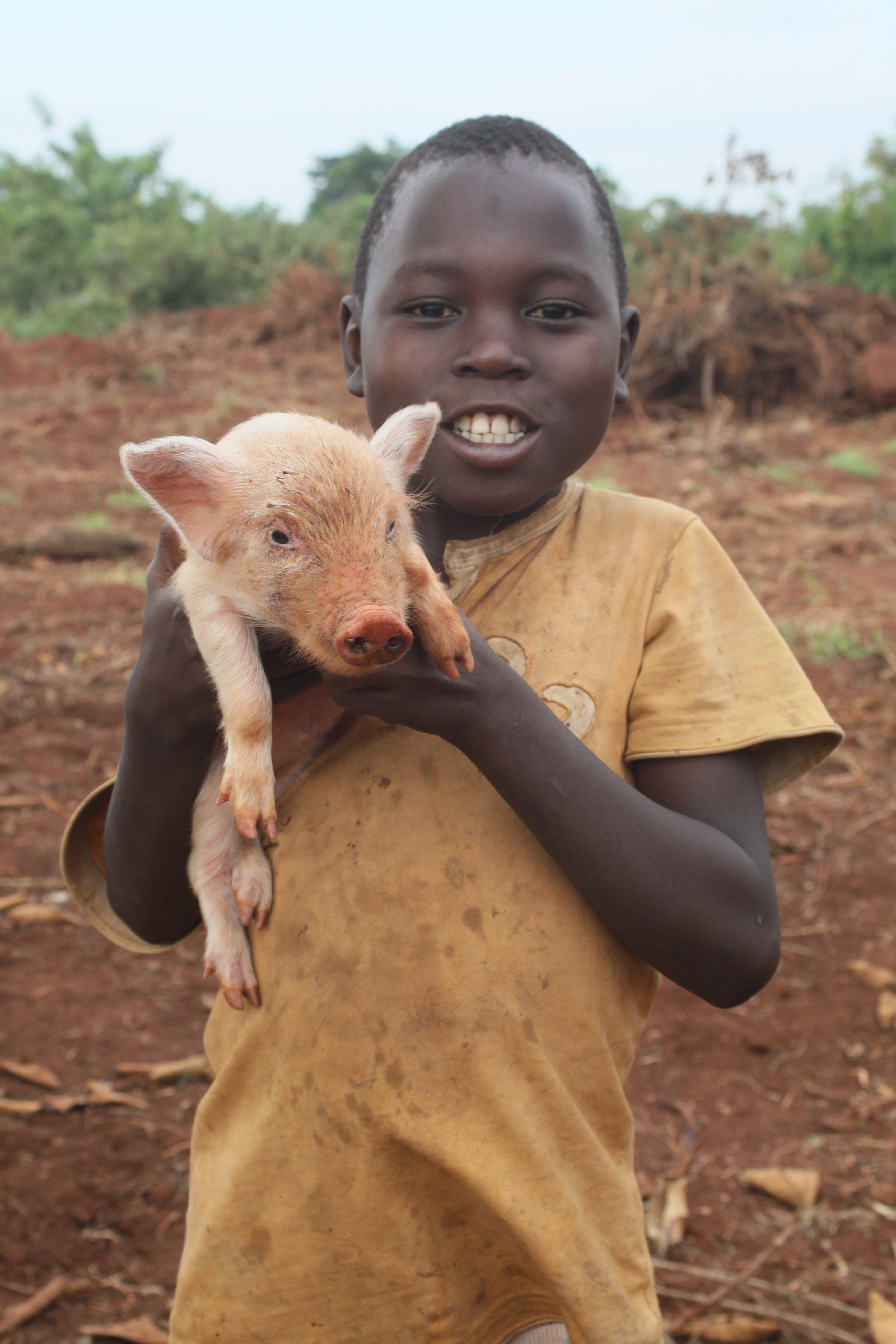 Help us kick start piggery businesses to help provide self-sustainable support for families in Zirobwe, Uganda.